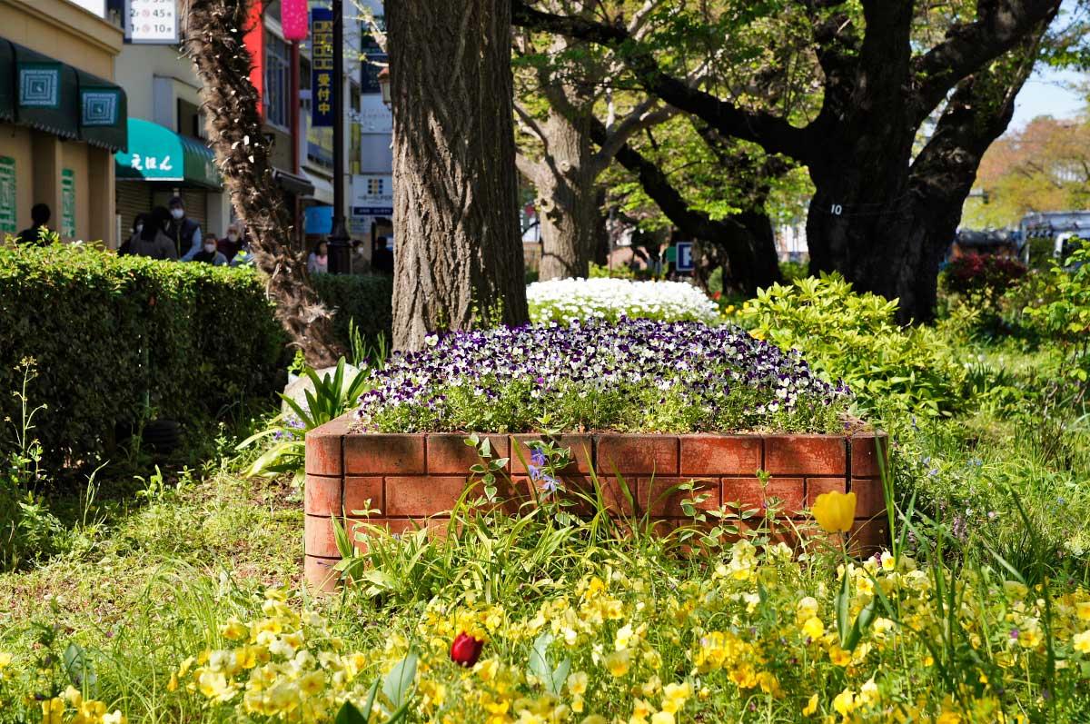 4月の大学通りの草木
